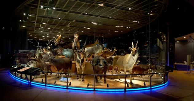 museum natural science japan 4